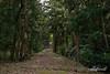Forest path to the Kamiichinomiya Oawa Shrine, Kamiyama, Shikoku Island, Japan