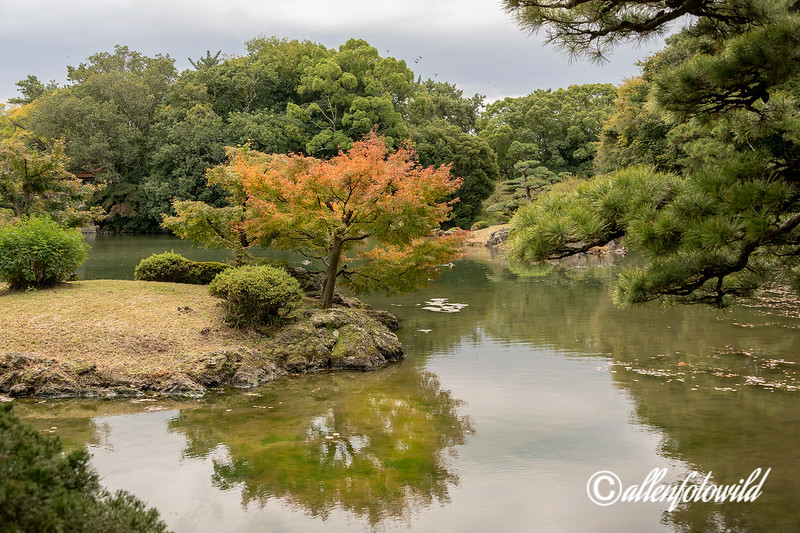 Gun'ochi pond  with Japanese maple in the fall, Ritsurin Garden, Takamatsu, Japan