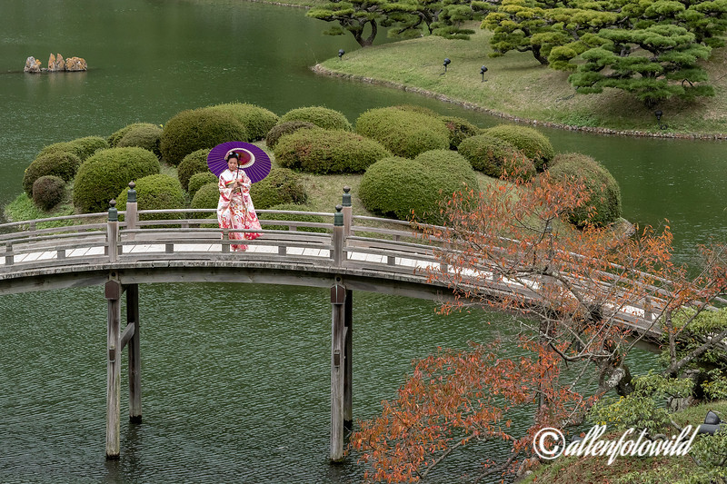 Woman in kimono with red maple leaves on Geishun-kyo bridge, Ritsurin Garden, Takamatsu, Japan