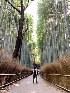 Arashiyama Bamboo Grove 竹林的道