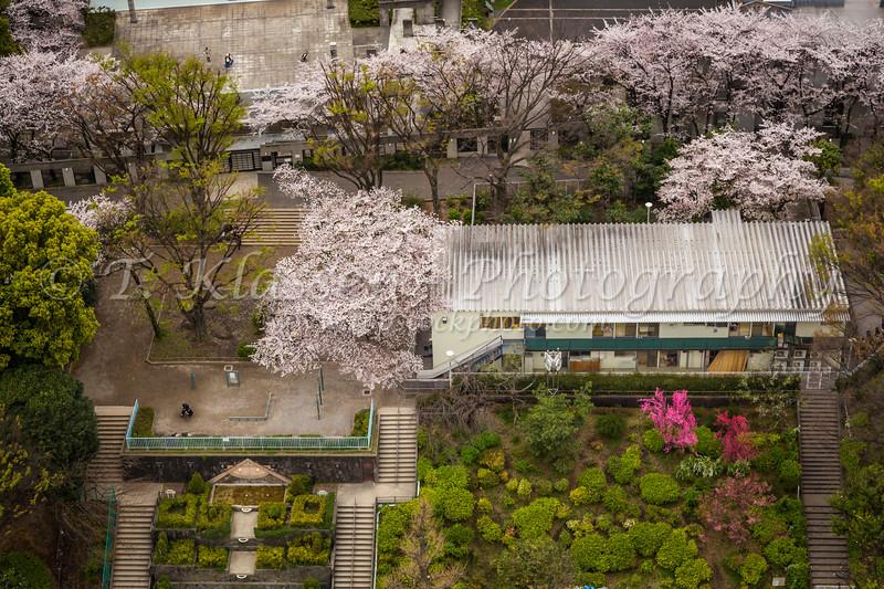 An aerial view of a small city garden in Korahuen, Bunkyo, Tokyo, Japan.