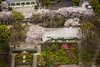 An aerial view of a small city garden in Korahuen, Bunkyo, Tokyo, Japan.