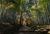 Bamboo-lined path to the Jizo-in Rinzai Buddhist temple (Take no dera), Kyoto, Japan