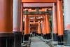 Hundreds of torii gates