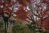 Kiyomizudera three story pagoda (1633) seen though red maple leaves, Kyoto, Japan