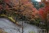 Winding path and fall leaves, Kiyomizudera Buddhist temple, Kyoto, Japan