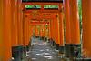 Fusimi Inari Torii Gates with level path