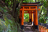 Fushima Inari~Old Torii Gates with steps going up