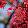 Red at Kinkaku-ji 2