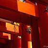 A View from Fushimi Inari