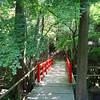Spring Pathway