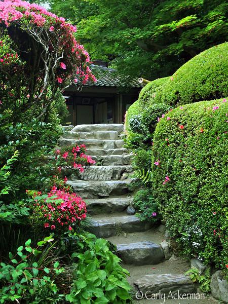 Shisendo in Spring