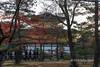 Kinkaku-ji with red maples