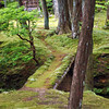 The Moss Garden at Saiho-ji