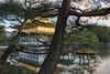 Kinkaku-ji seen through cypress trees