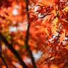 Orange at Kinkaku-ji
