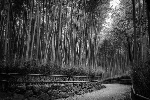 Bamboo Path・竹林