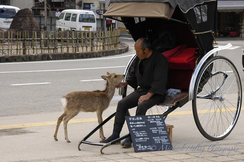 Deer and Buggy - Miyajima