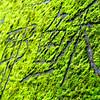 Moss graffiti along the Mount Kachikachi trails