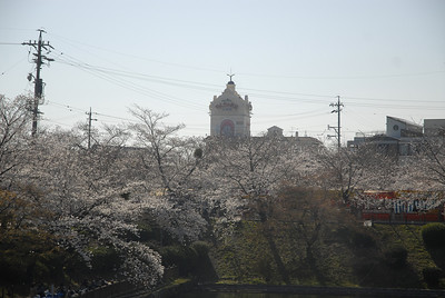 """Very beautiful view of the cherry blossoms... with a """"love hotel"""" standing out in the background!"""