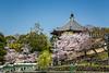 A reflection pond with blooming cherry trees in Nara Park, Nara, Nara Prefecture, Honshu Island, Japan.