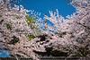 Nara, Nara Prefecture, Honshu Island, Japan.