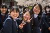 Japanes students at Nara Park and the Tōdai-ji Temple, Nara Prefecture, Honshu Island, Japan.