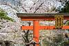 Blooming cherry trees and a torii gate near the Kofuku-ji Temple in Nara, Nara Prefecture, Honshu Island, Japan.