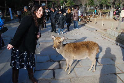 Minako and the Famous Deer of Nara  (C) 2009 Brian Neal