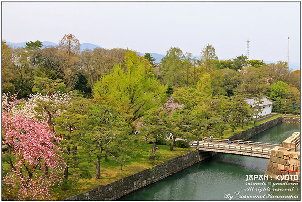 Sakura trees, Stone walls, the west bridge and moats