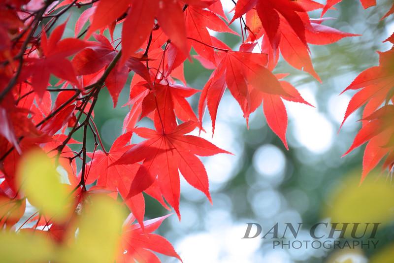 Red in Nikko 4