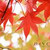 Red in Nikko