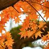 Orange in Nikko 2