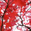Red in Nikko 3