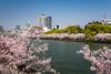 Sakura cherry blossom trees on the Okawa River near The Mint in Osaka, Japan.