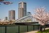 Sakura cherry blossoms at The Mint in Osaka, Japan.