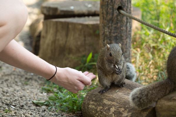 Machida Squirrel Park