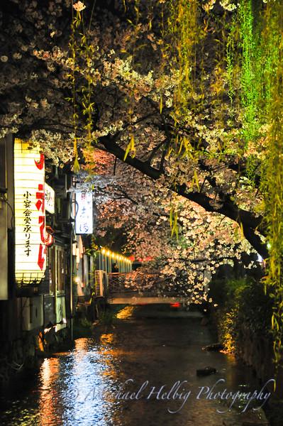 Sakura - Cherry Blossoms Japan