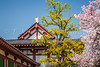 Cherry blossoms and Japanese architecture at the Sensoji Temple in Osaka, Japan, Asia.