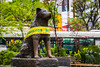 The Hachiko dog bronze statue near the Shibuya train station in the Shibuya district of Tokyo, Japan, Asia.