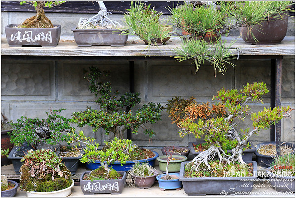 Love this mini Bonsai garden