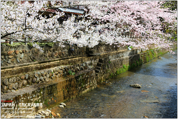 Walking along the canal and Sakura - Shimoninomachi, Takayama