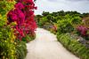 Sand street with bougainvillea flowers, and stone fencing in a village on Taketomi Island, Okinawa Prefecture, Japan.