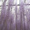 flower shower,Ashikaga,Tochigi,Japan<br /> <br /> We took around 200 photos in this garden.