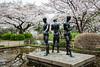 Cherry blossom trees in Chidorigafuchi Park, Tokyo, Japan.