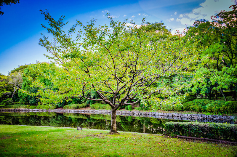 My Favorite Tree in Kitanomaru Park - © 2012 Brian Neal