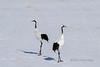 Cranes and shadows