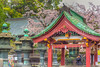 Japanese pagoda architecture with cherry blossoms in Ueno Onshi Park, Taito, Tokyo, Japan, Asia.