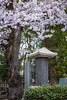 Cherry blossom trees and a Japanese memorial in Ueno Onshi Park, Taito, Tokyo, Japan, Asia.