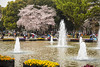 Cherry blossom trees and water fountains in Ueno Onshi Park, Taito, Tokyo, Japan, Asia.